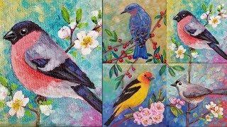 Easy Bird Acrylic Painting Tutorial Bullfinch Songbird Series