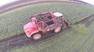 Lincolnshire Sugar beet harvesting shot around sunset