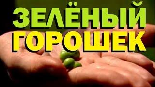 Галилео. Зеленый горошек 🍱 Green peas