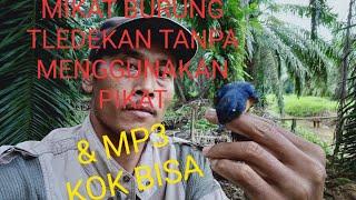 Mikat burung tledekan tanpa menggunakan pikat