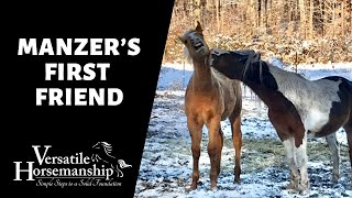 MANZER'S FIRST FRIEND // Versatile Horsemanship
