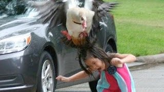 Little Girl Gets HILARIOUSLY Attacked By Goose | What's Trending Now