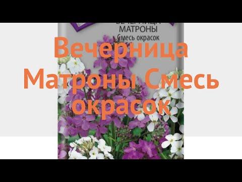 Вечерница матроны обыкновенный Смесь окрасок 🌿 обзор: как сажать, семена вечерницы матроны