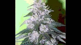 Uplifter-Marijuana