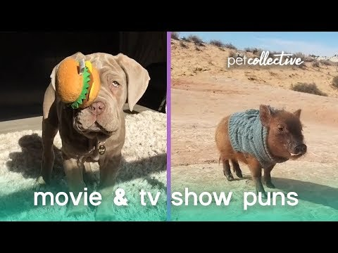 Animal Movie & TV Puns | The Pet Collective