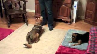 Training Two Dogs: Zani's First Lessons On The Mat