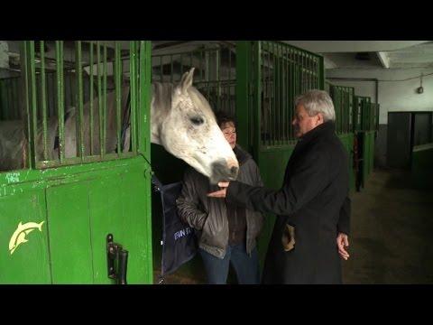 Political horse-trading threatening Poland's prized Arabians?
