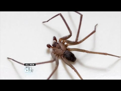 Is It A Spider Bite Or Something Else? from YouTube · Duration:  3 minutes