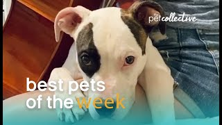 Music Loving Dog | Best Pets of the Week