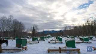 Dog Sledding - New Hampshire