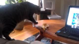 Этот страшный банан Кормушка Уникальное Фото Видео Приколы Гифки