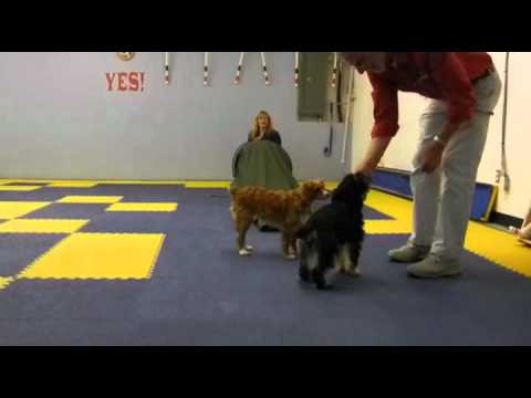 Amy Beth & Bitsy Dog do Agility & Tricks at All Dogs Allowed.flv