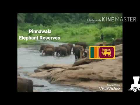 Sri Lanka Travel video by shree Rajyash Holidays Mumbai