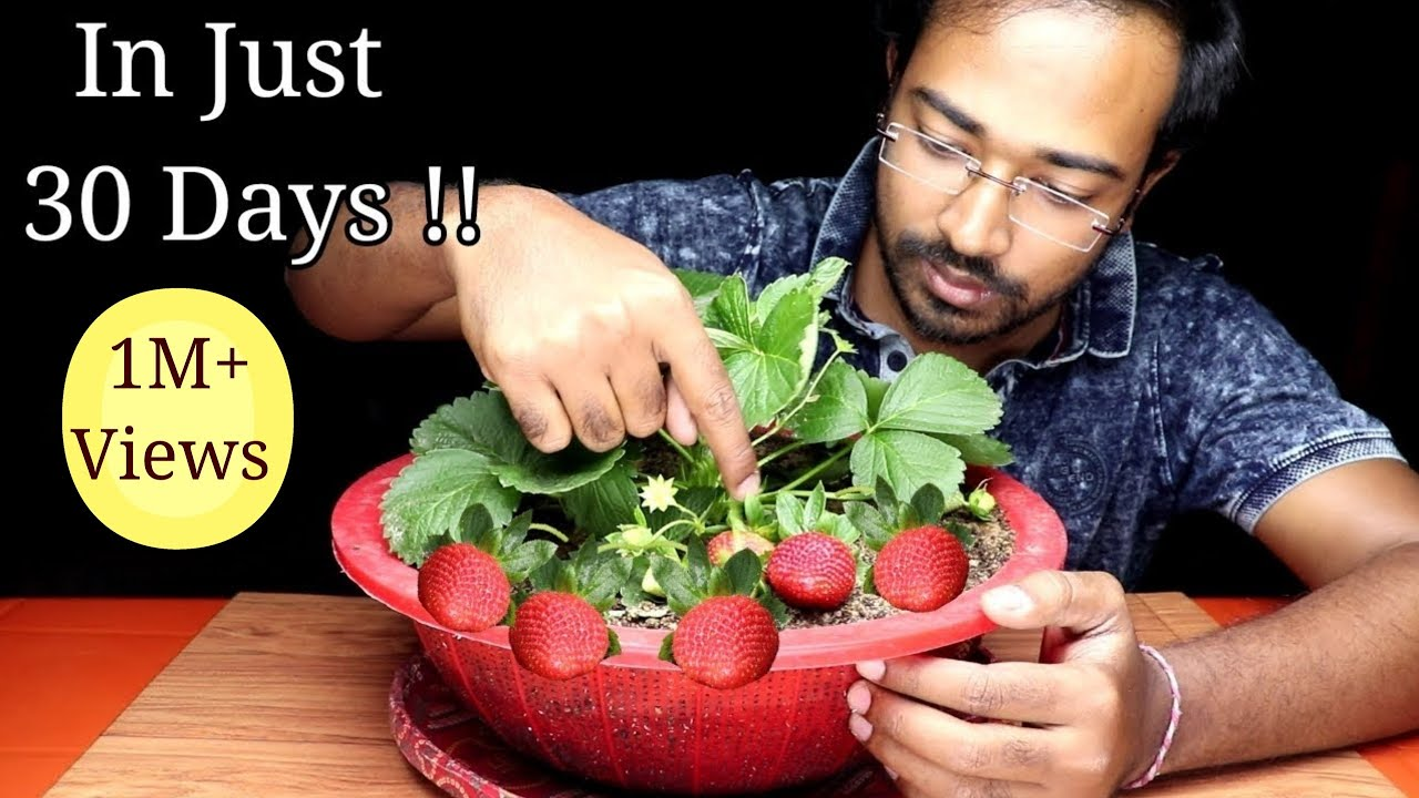 How To Grow Strawberries In Pot