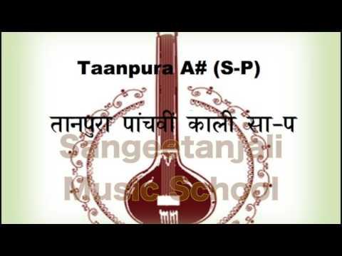 तानपूरा पाँचवीं काली - सा-प (Tanpura A# S P)