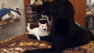 Кошка против собаки прикол! :)))