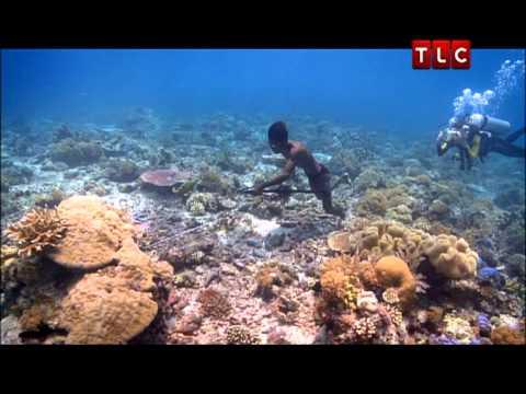 Episode 6: Pulau Paradise (II)