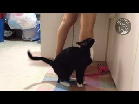 Maomao asks for food. Will perform tricks for food.