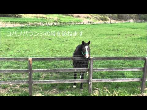 <b>GRANDAME</b>-<b>JAPAN</b>優勝馬のふるさと/高山牧場(アスカリーブル号 <b>...</b>