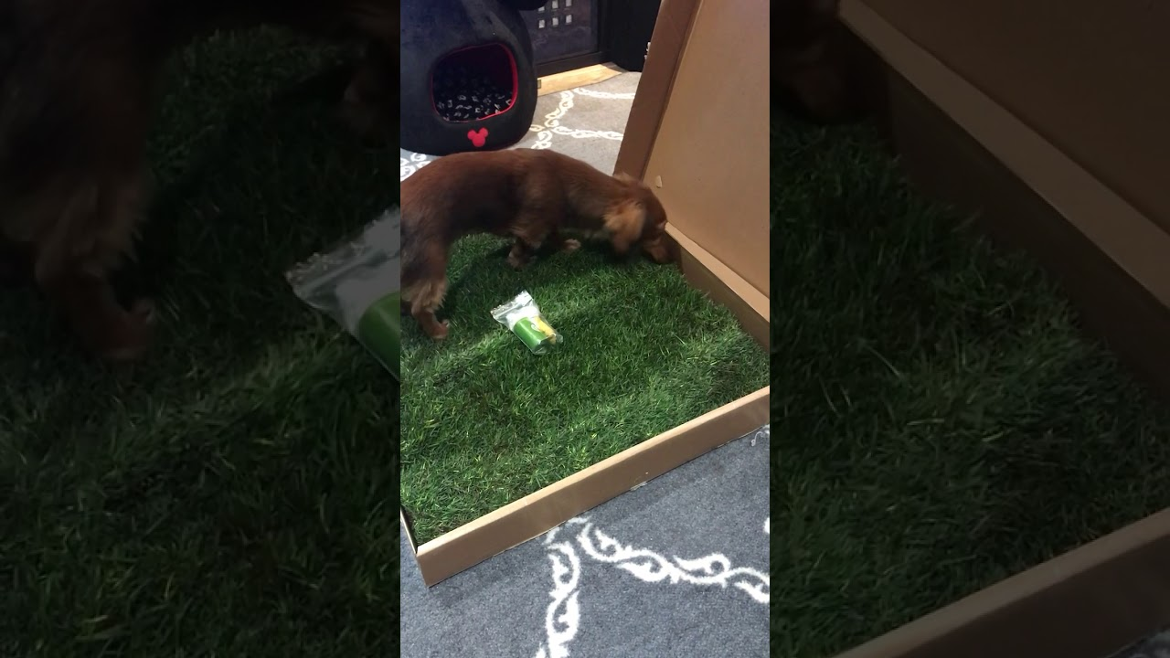 Patio Pet Life So Excited For My Grass Youtube