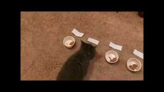 Kitten Names Himself thumbnail