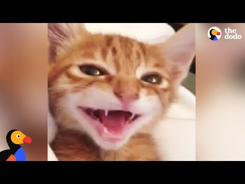 Kitten Singing Lullabies With Mom | The Dodo