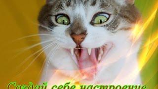 Забавные животные Приколы кошки собаки Позитив для детей Создай себе хорошее настроение