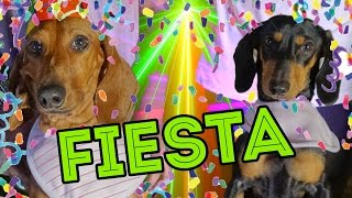 CUMPLI 4 AÑITOS!! | LOS POLINESIOS VLOGS thumbnail