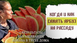 Когда и как сажать семена арбуза на рассаду для открытого грунта +Результаты выращивания арбуза дома