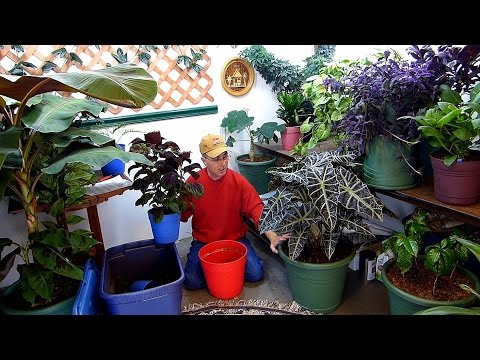 Best answers to YOUR indoor gardening questions