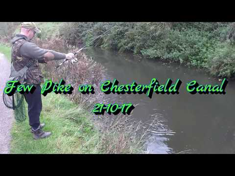Few Pike on Chesterfield Canal 21-10-17