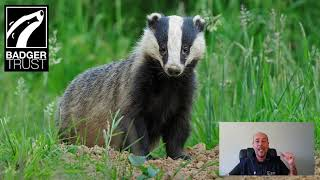 National Badger Day - Why I love badgers - Andy Rouse