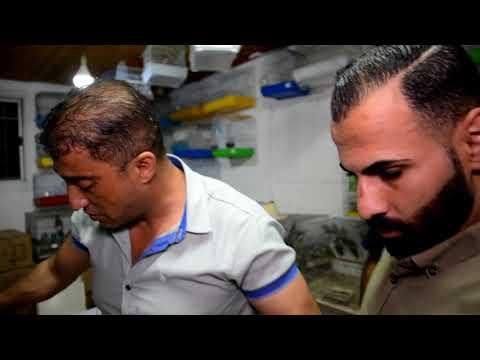 افعى فلسطين الخطيره سامة تقتحم محل طيور مع جمال العمواسي