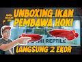 Unboxing Ikan Pembawa Keberuntungan Asli Indonesia  Mp3 - Mp4 Download