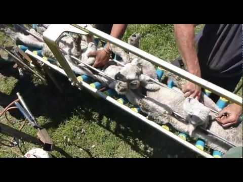 Vetmarker - Lamb marking, lamb docking and lamb tailing