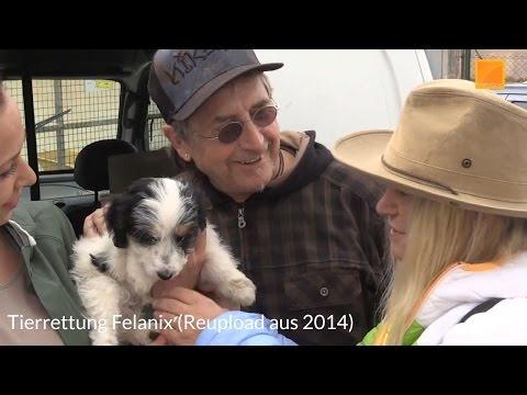 (RU) Tierrettung Felanix - Ein Tag mit Martin Semmelrogge