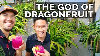 Secret Dragon Fruit Cąre Tips From a Master Dragon Fruit Grower