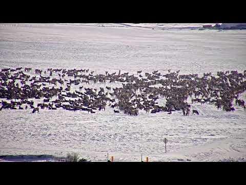 National Museum of Wildlife Art - Live Elk Refuge - SeeJH.com