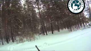 Охота на кабана в зимний период (видео)