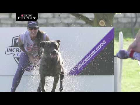 Fetch It Competition - Purina Pro Plan Incredible Dog Challenge