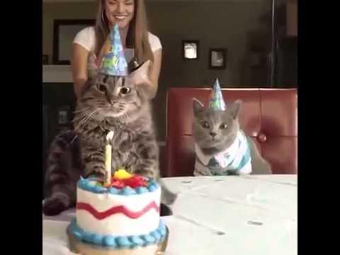 Katzen Geburtstag Youtube