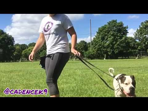 Rescue dog learns heeling