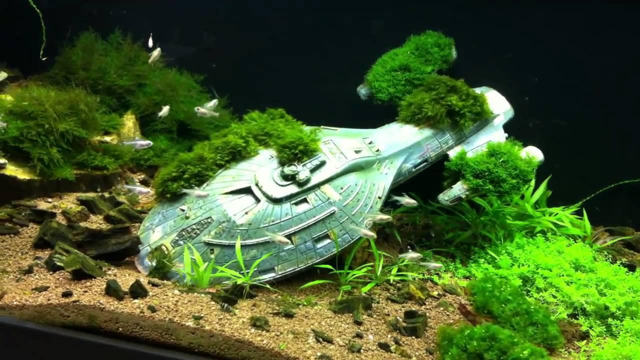 U S S Voyager Aquarium Youtube