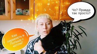 Как переехать в Польшу с котом? Переезд с домашним животным