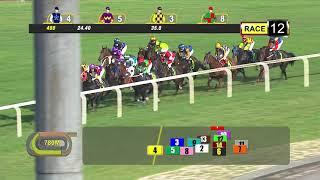 Vidéo de la course PMU PRIX COURSE 12