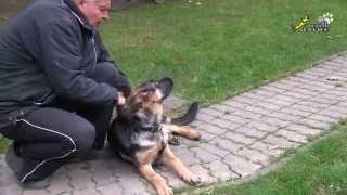 Собака для охраны, как отучить щенка кусаться