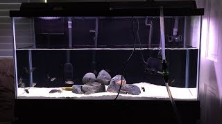 How to Do Faster, Easier, and Cheaper Aquarium Water Changes