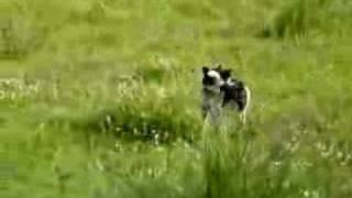Lady Elaine - Rat Terrier Rescue Canada