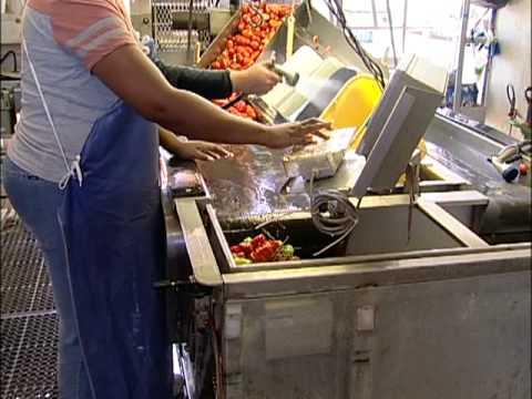 DiNapoli Tomatoes - Factory Tour Video