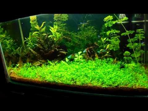Akvarisztika kezdőknek 2  (biológia, növények)